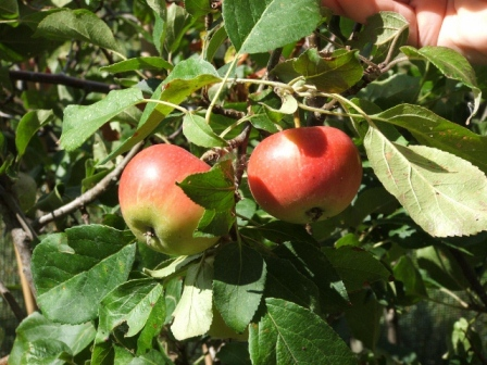 Apple - Discovery (1)