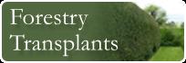 forestry transplants