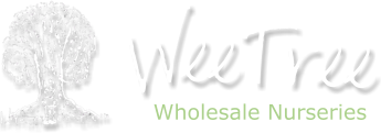 WeeTree Wholesale Nurseries