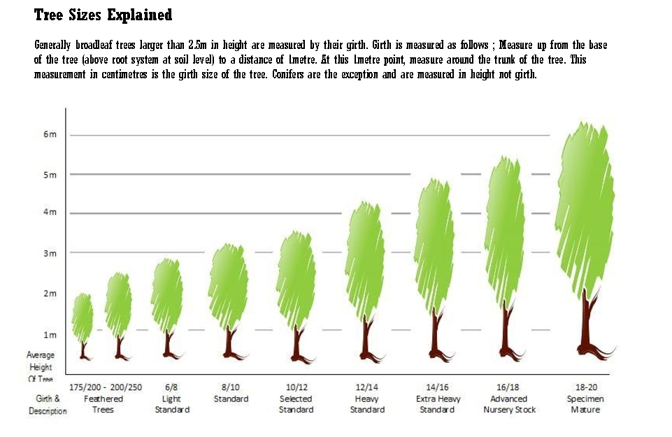 tree sizes explained